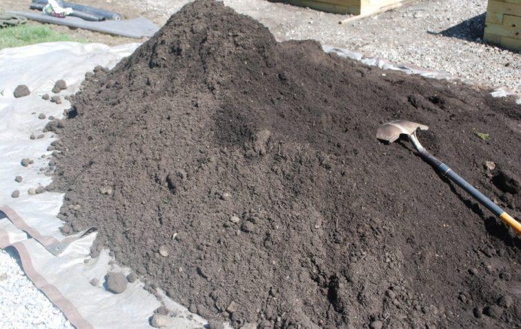 черноземная почва
