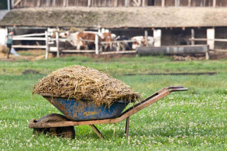 Какой навоз лучше для огорода: конский или коровий?