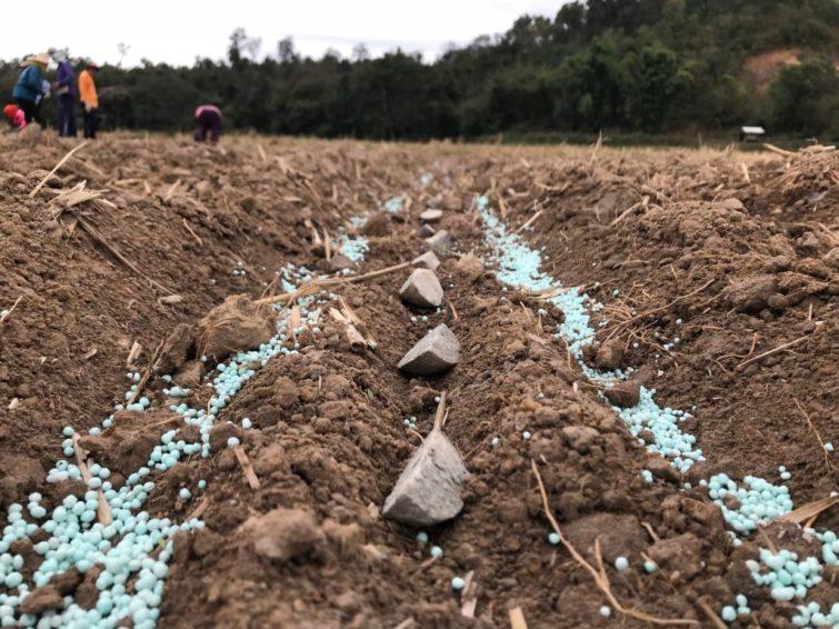 применение калийных удобрений