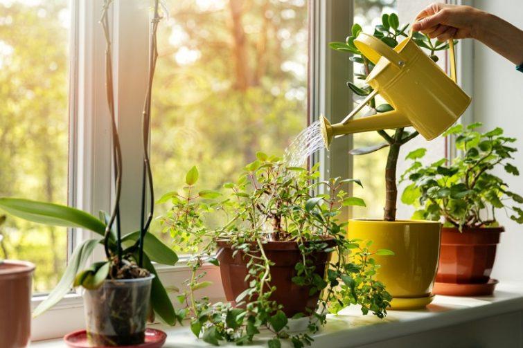 Удобрение комнатных растений и цветов