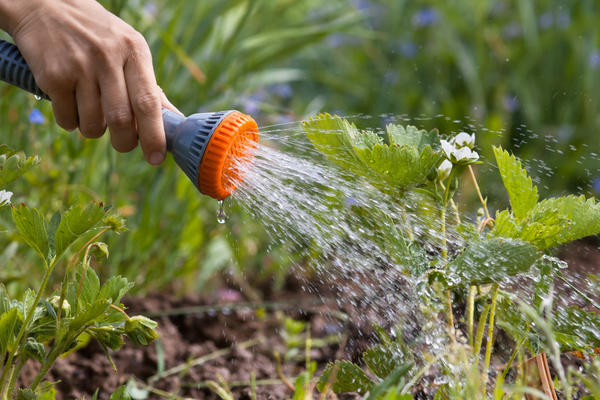 полив рассады