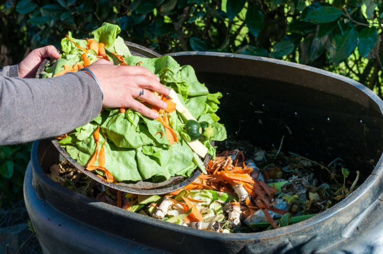компостирование отходов продуктов